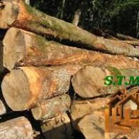 Photo 1 contruire en bois stmb